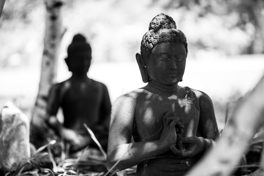 Buddha Statues under Trees. Blue Cliff Monastery, Pine Bush, New
